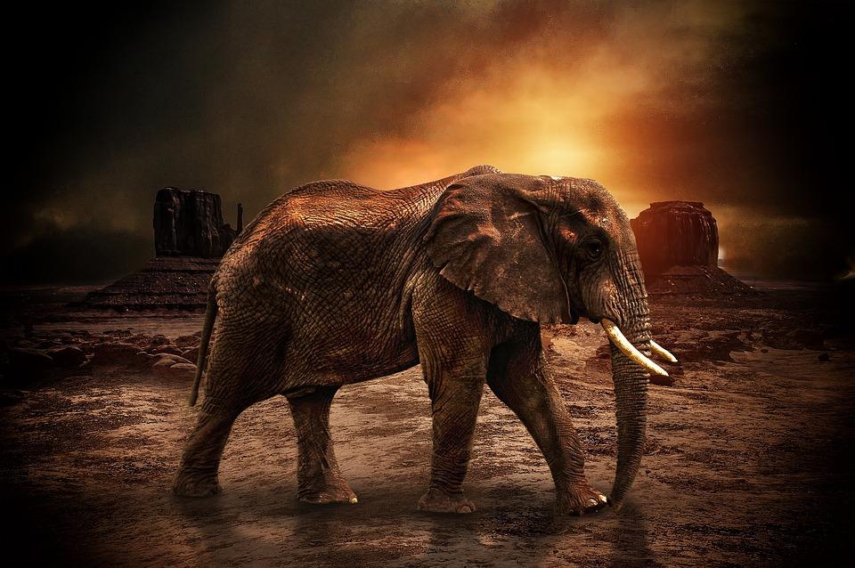 Animal, Nature, Elephant, Natural, Wildlife, Wild