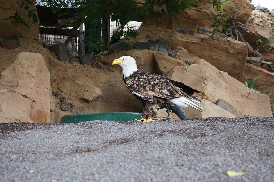 Nature, Outdoors, Bird, Animal, Wild, Freedom, Wildlife