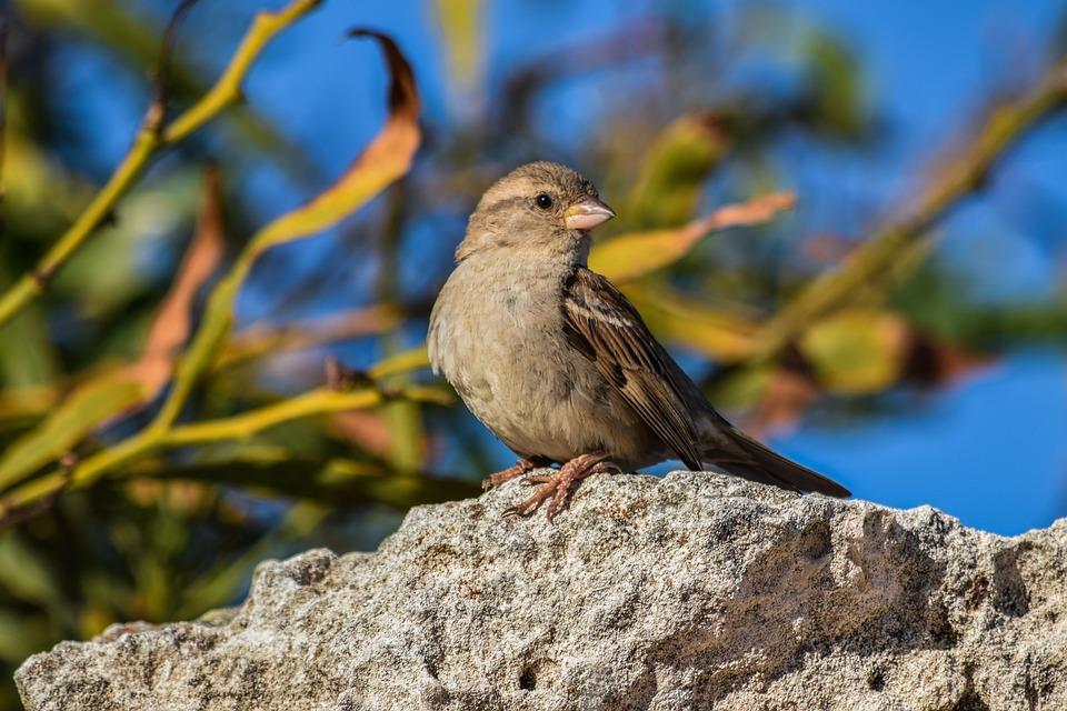 Sparrow, Nature, Bird, Wildlife, Outdoors, Animal, Wild
