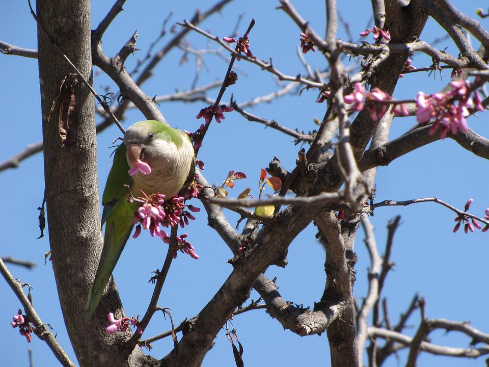 Parrot, Tree, Nature, Bird, Wildlife, Colorful, Wild