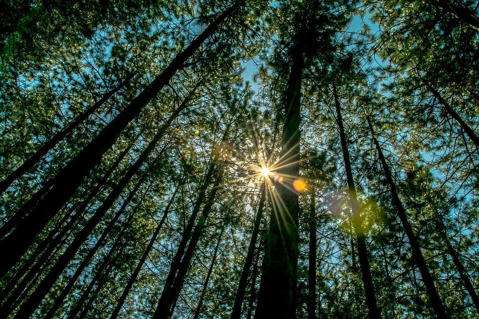 Forest, Nature, Walk, Tree, Wild Plant