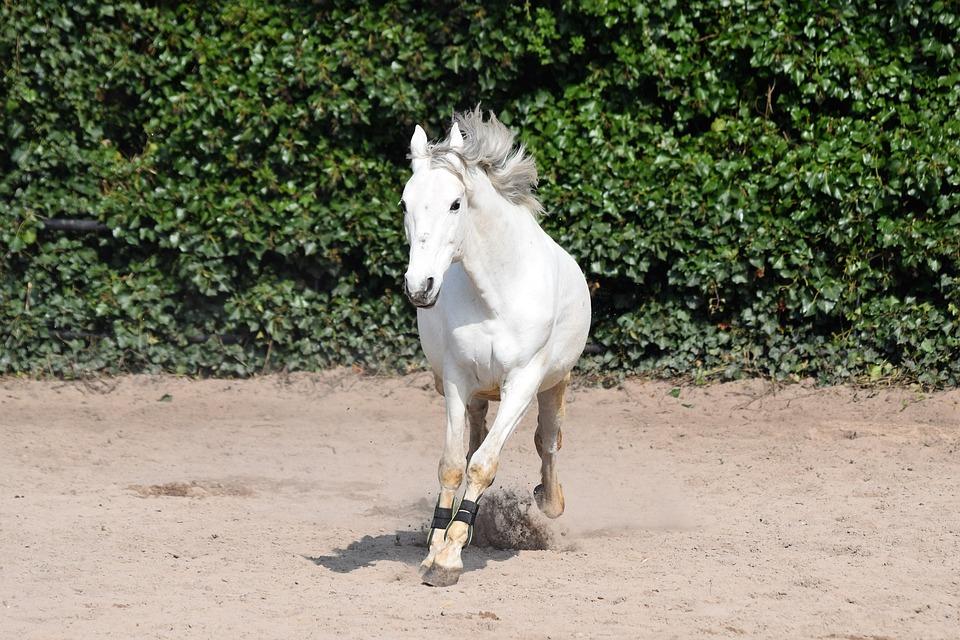 Horse, Wild, Pony, Horseback, Horses, Nature, Animal