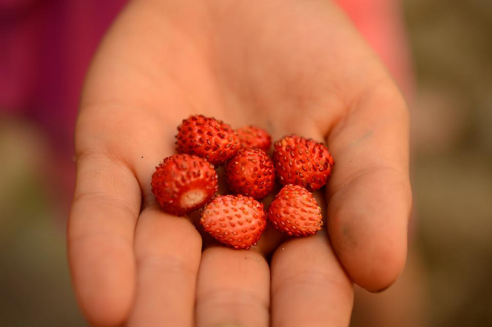 Wild Strawberry, Hand, Summer, Berries, Red, Garden