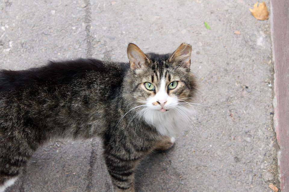 Cat, Street Cat, Street, Animal, Fur, Pet, Wild, Cute