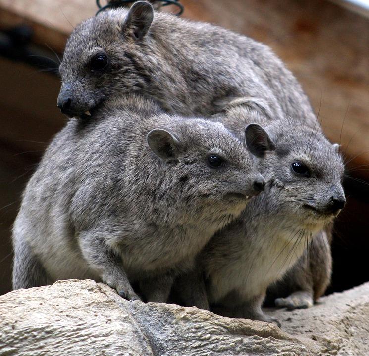 Wildlife, Mammal, Nature, Wild, Fur, Cute, Animal