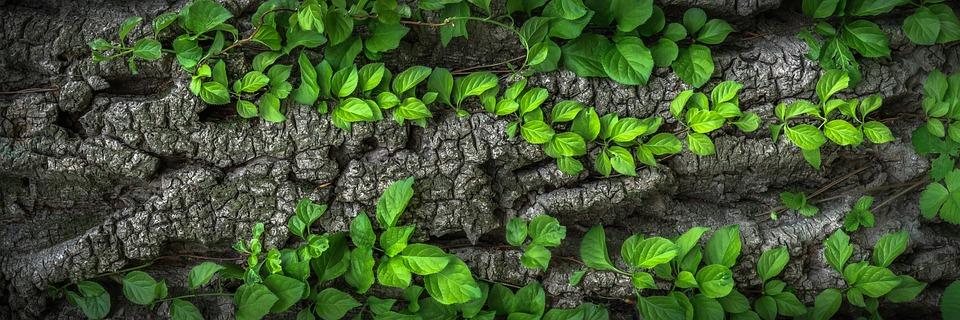 Leaves, Foliage, Trunk, Bark, Plants, Wood, Wild, Green