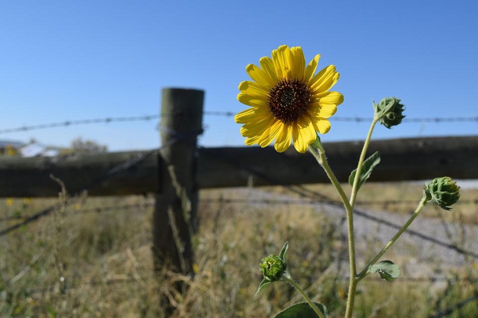 Flower, Wild, Nature, Desert, Yellow, Wilderness