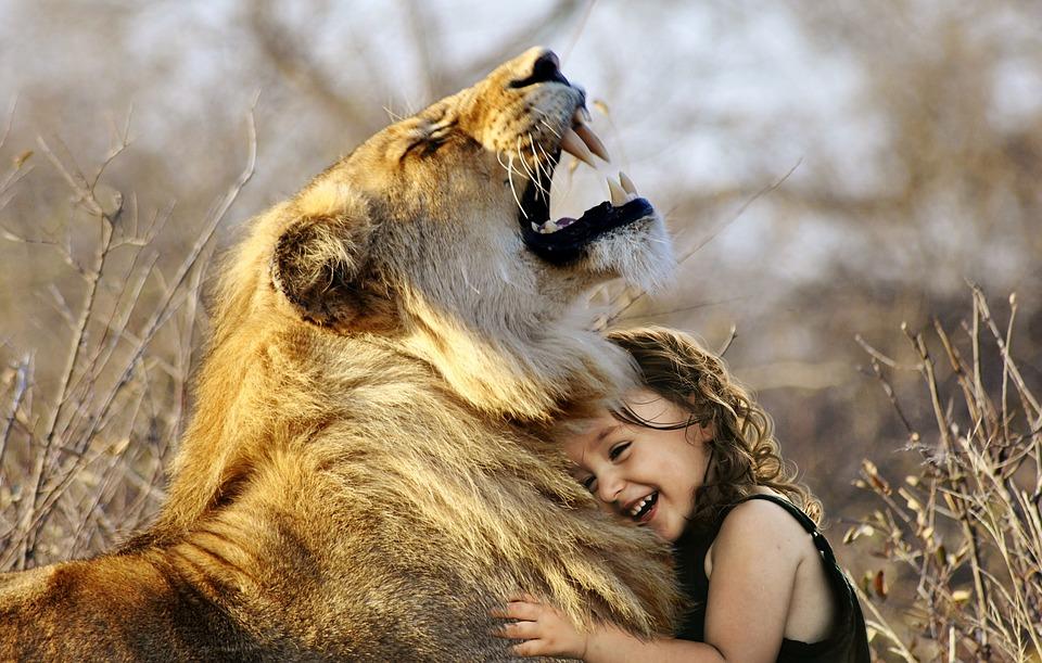 Lion, Roar, Africa, Animal, Wildcat, Wild, Cat, Fur