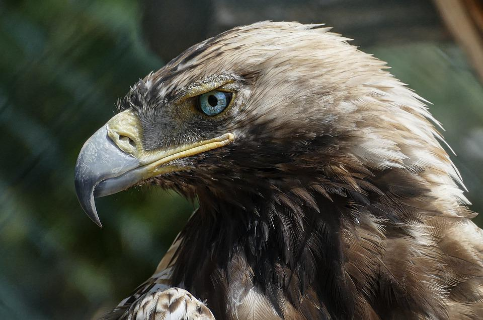 Eagle, Bird, Exotic, Wilderness, Wildlife