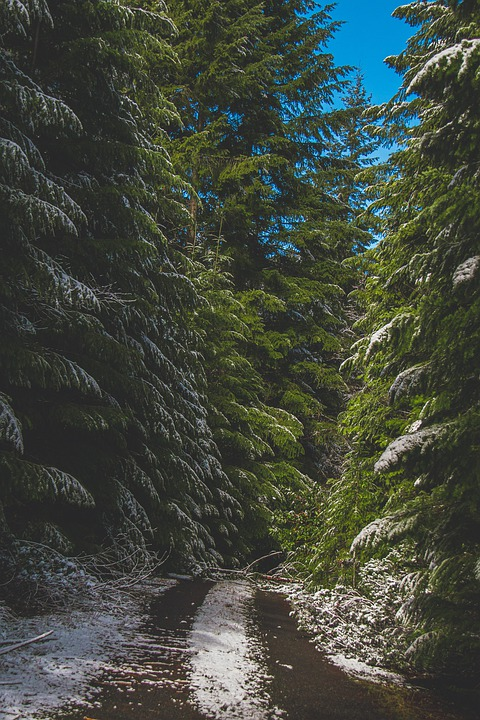 Road, Trip, Wilderness, Rural, Forest, Nature, Trees