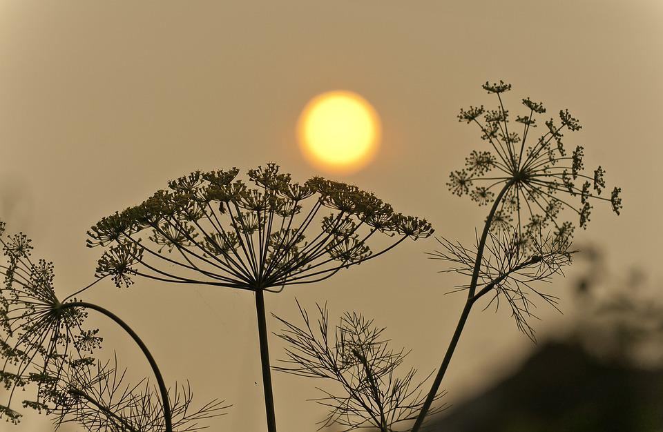 Sun, Smoke, Wildfire, Siberia, Landscape, Pollution