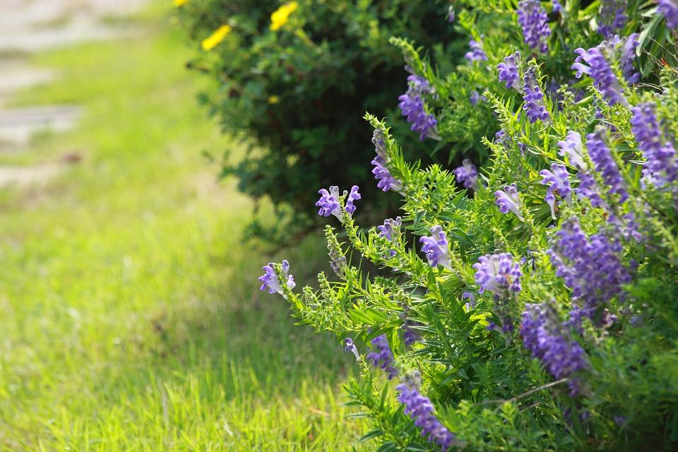 Flowers, Nature, Plants, Summer, S, Wildflower, Grass