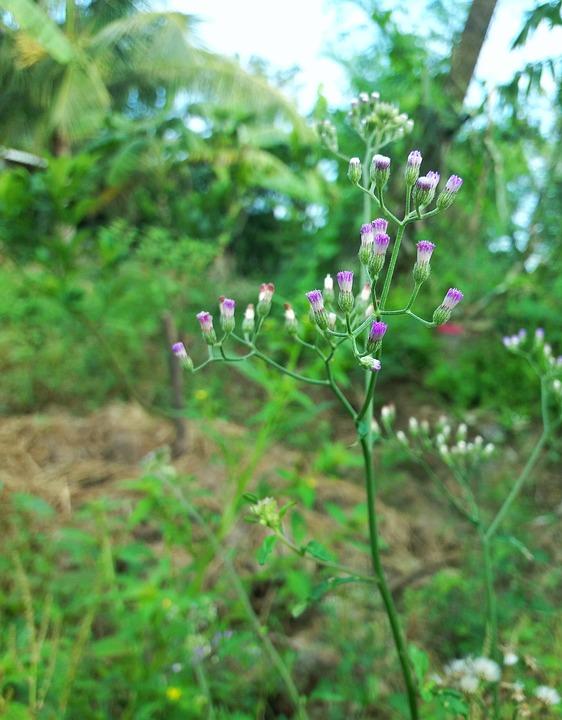 Flower, Flowers, Wildflowers, Violet, Purple Flowers
