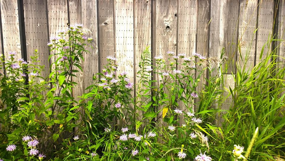 Fence, Wildflowers, Trail, Landscape, Wild, Meadow