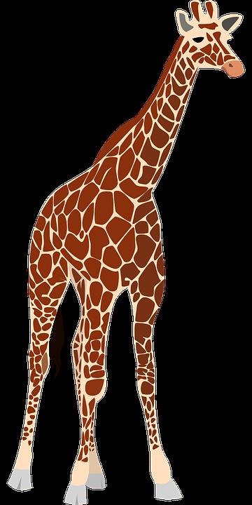Giraffe, Nature, Africa, Safari, Wildlife, Animal, Zoo