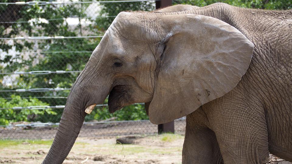 Elephant, Animal, Nature, Zoo, Mammal, Wildlife