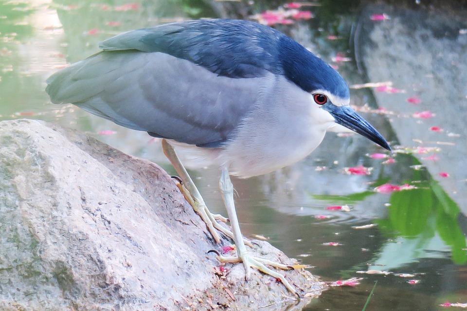Bird, Nature, Wildlife, Outdoor, Animal, Wings, Tree