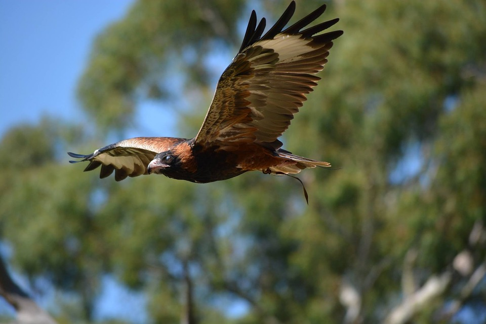 Bird, Wildlife, Nature, Animal, Outdoors
