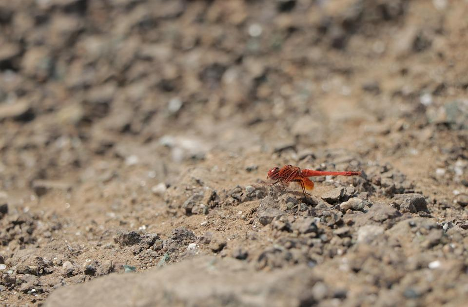 Nature, Sand, Little, Animal, Wildlife, Micro, Colorful