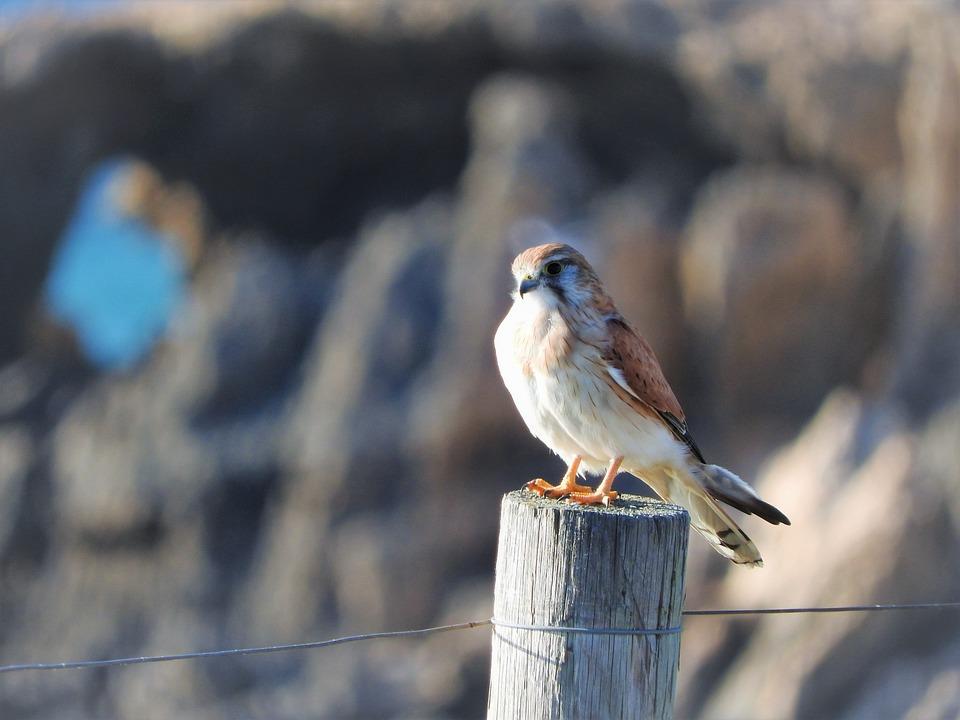 Bird, Small, Nature, Animal, Wildlife, Hummingbird