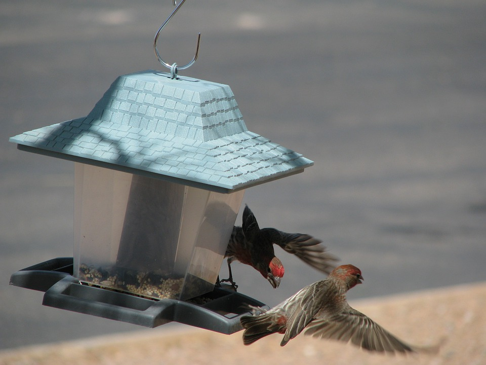 Arizona, Bird Feeder, Wildlife, Birds, Flight, Wings