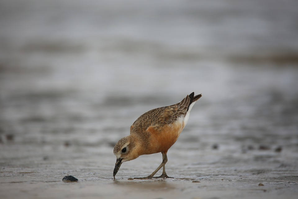 Wildlife, Bird, Water, Animal, Beach, Shorebird