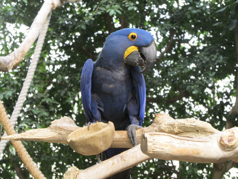 Parrot, Bird, Fly, Animal, Wildlife, Colorful, Macaw