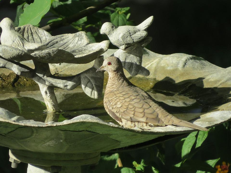 Bird, Close Up, Birdbath, Wildlife