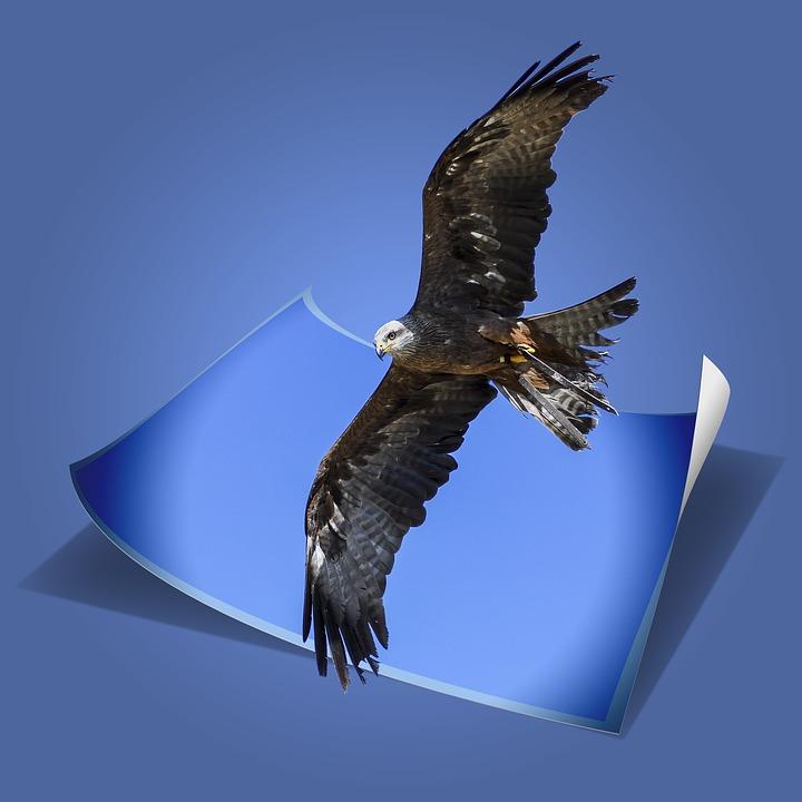 Buzzard, Raptor, Flight, Bird, Sky, Blue, Wildlife