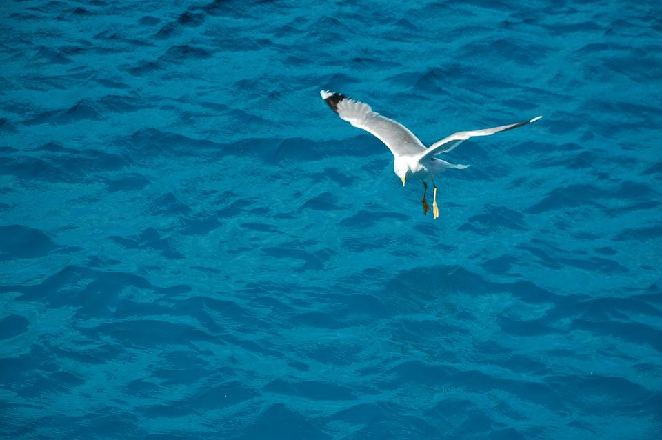 Seagull, Bird, Sea, Gull, Nature, Wildlife, Ocean