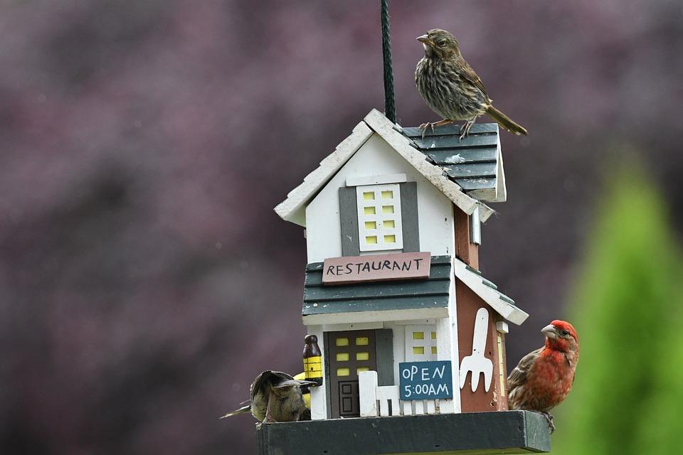 Birds, Feeder, Wildlife, Food, Animal