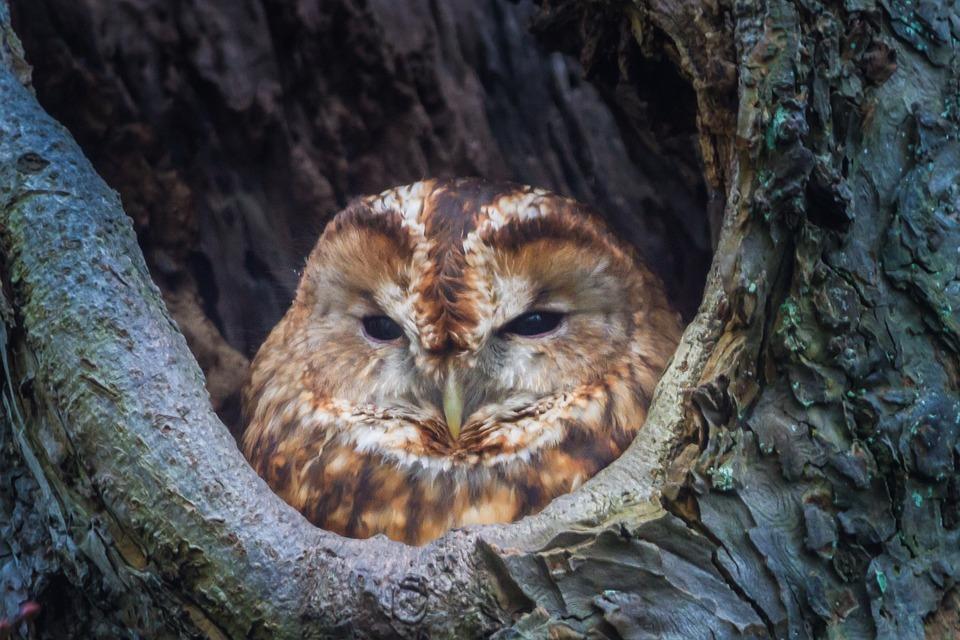 Nature, Wildlife, Birds, Wood, Animal Kingdom, Outdoor