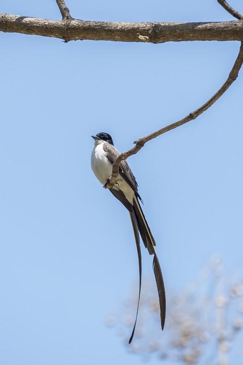 Birds, Nature, Wildlife, No Person