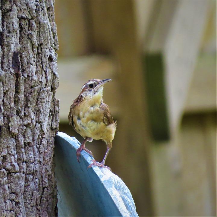 Bird, Small, Close Up, Wildlife