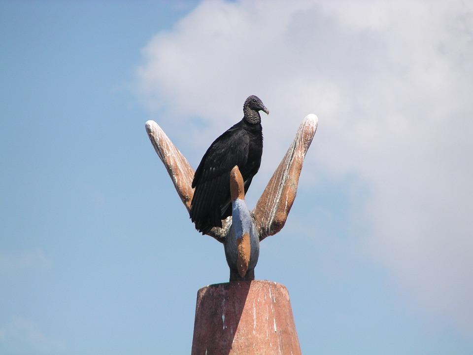 Vulture, Bird, Fly, Wings, Feather, Wildlife, Beak