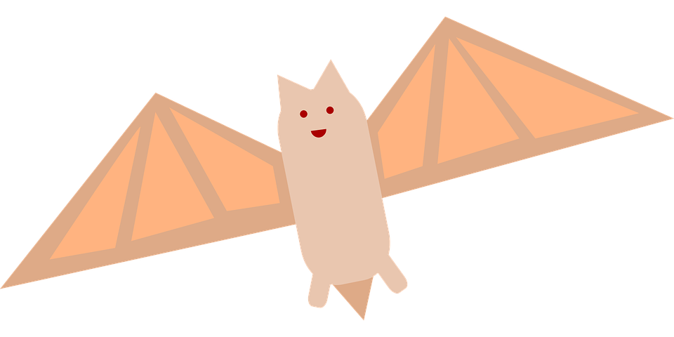 Bat, Nocturnal, Animal, Mammal, Wildlife, Flying, Wing