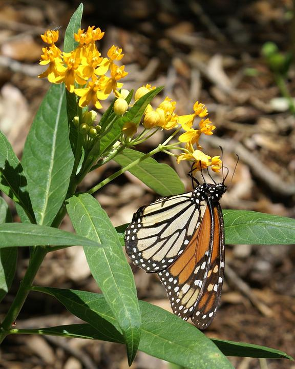 Butterfly, Insect, Nature, Outdoors, Wildlife, Wing