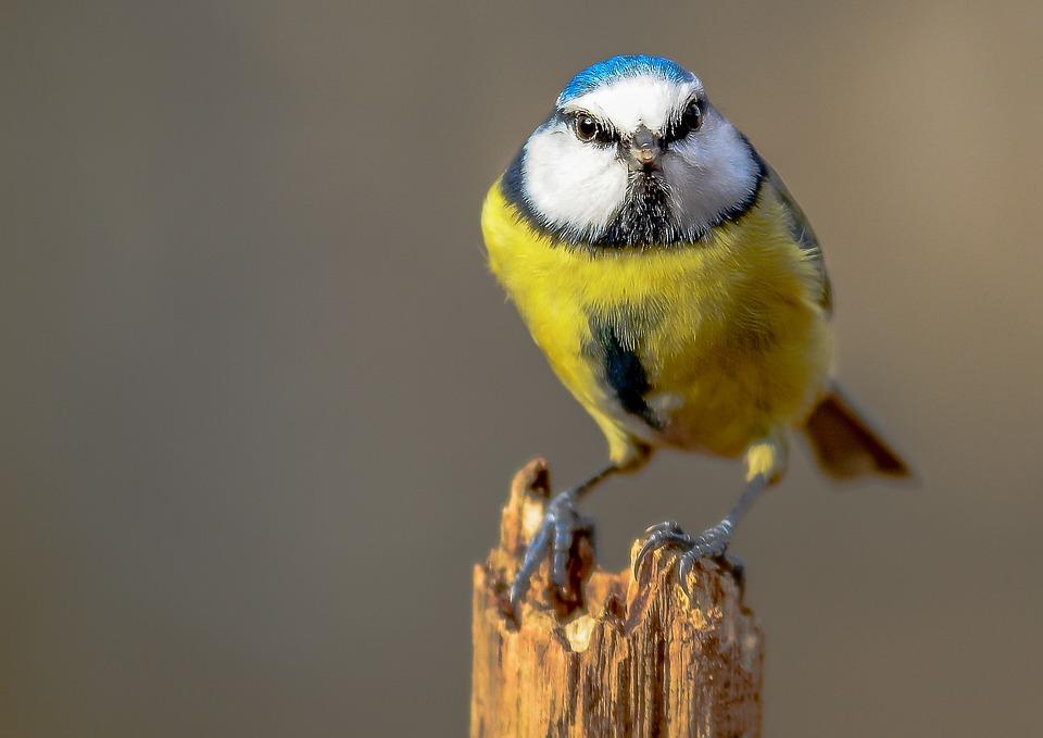 Bird, Wildlife, Nature, Animal, Little, Outdoors, Wild
