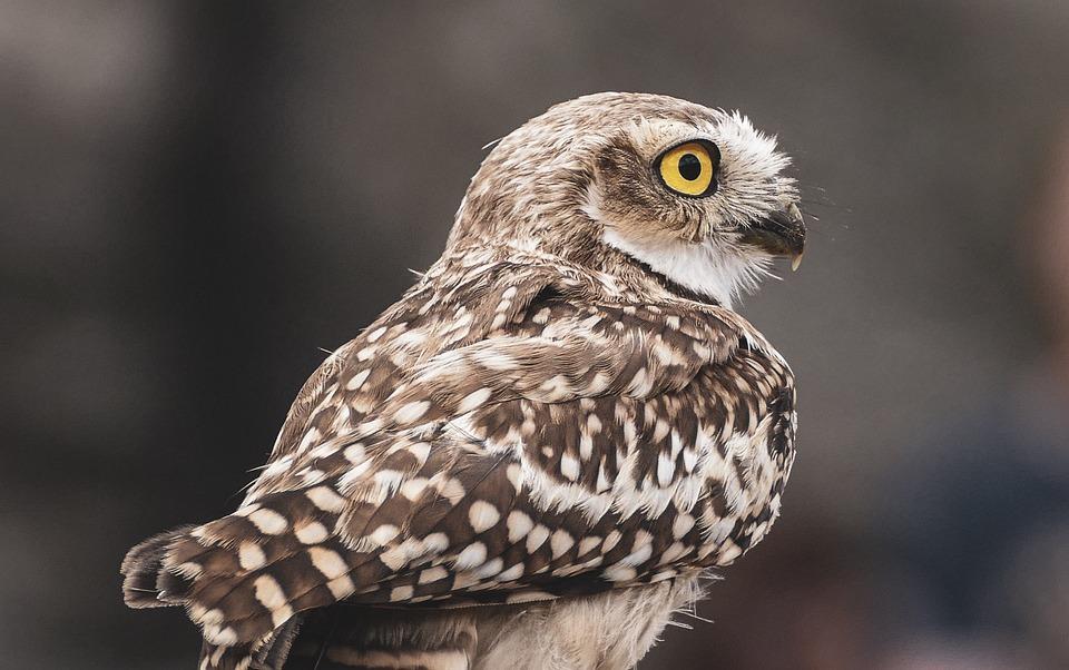 Bird, Nature, Animal, Raptor, Eyes, White, Wildlife