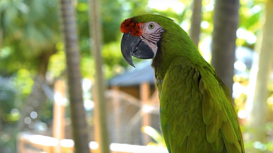 Parrot, Nature, Animal, Bird, Wildlife, Jungle