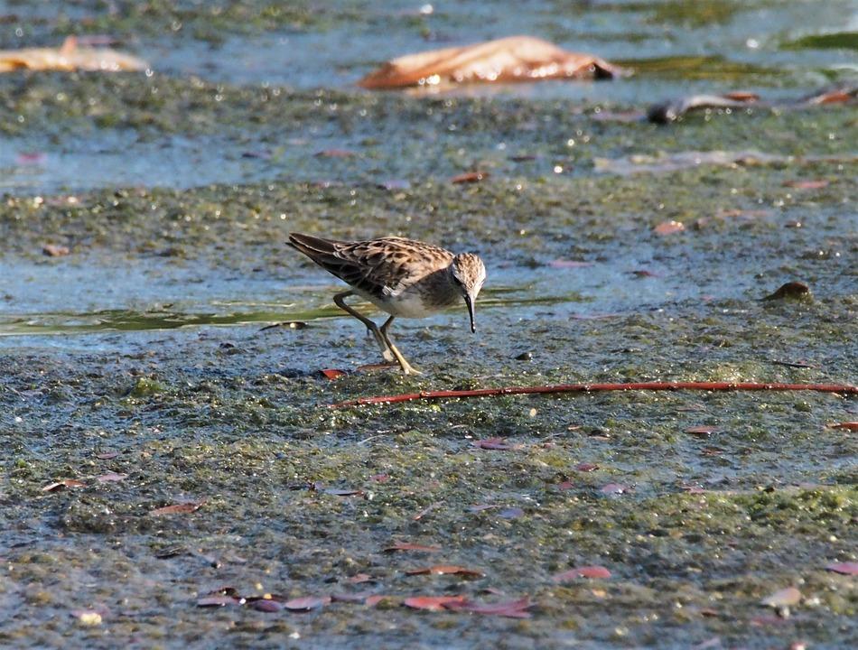 Bird, Water, Wildlife, Nature, Shorebird, Outdoors