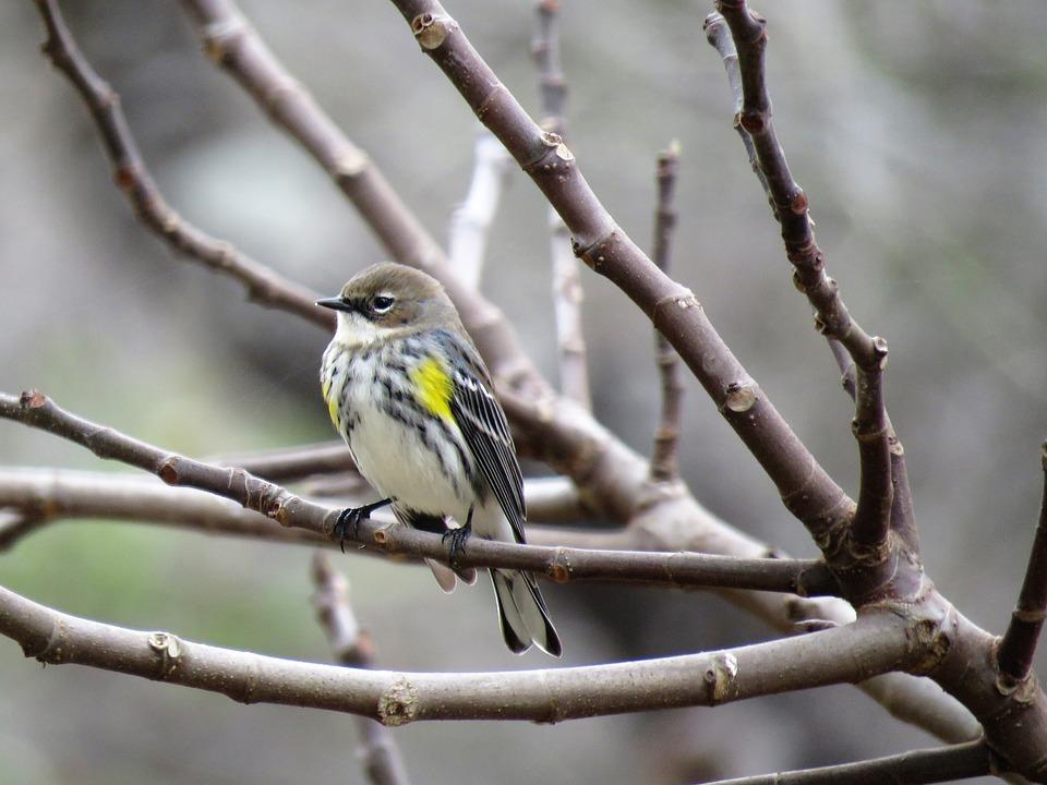 Bird, Nature, Outdoors, Tree, Wildlife