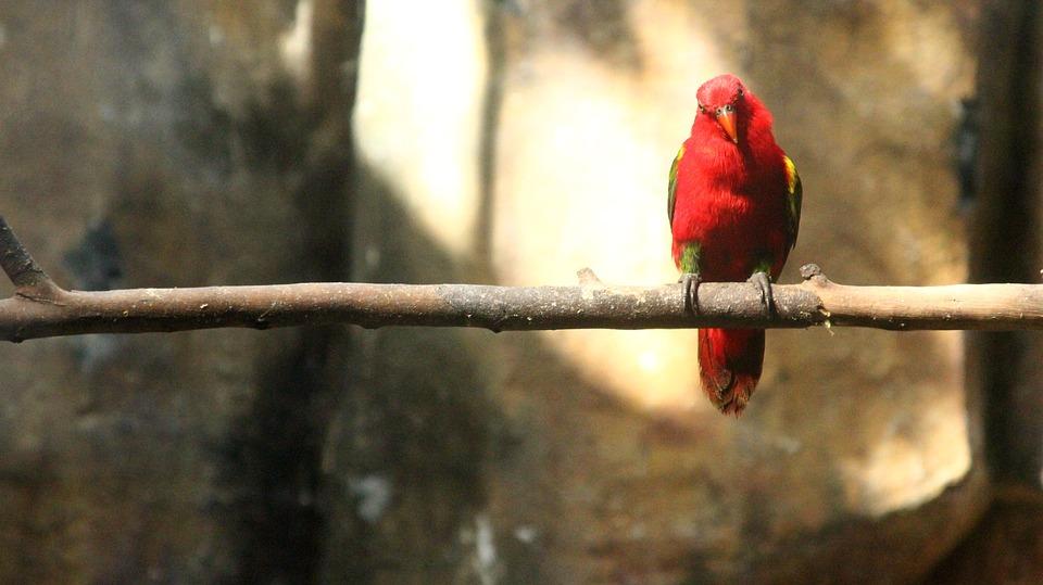 Nature, Wildlife, Bird, Outdoors, Animal