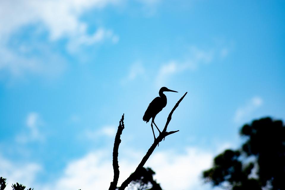Bird, Silhouette, Sky, Nature, Wildlife, Ocean