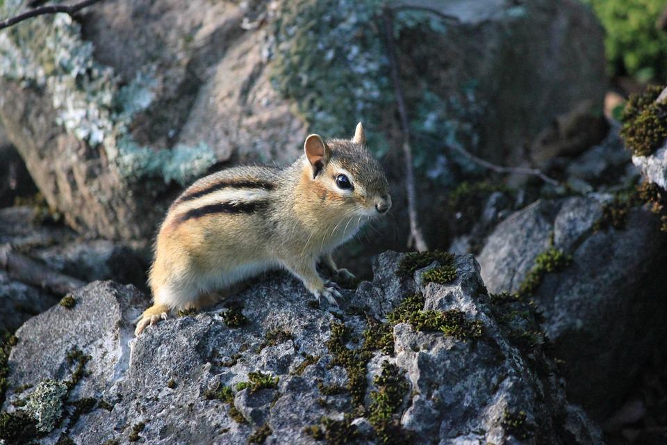Nature, Wildlife, Outdoors, Rock, Animal, Mammal