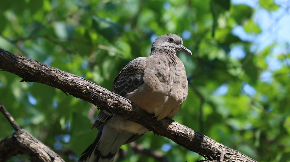 Nature, New, Wildlife, Animal, Outdoors, Park, Pigeon