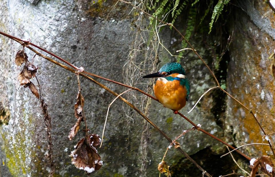 Bird, Kingfisher, Colorful, Wildlife Photography