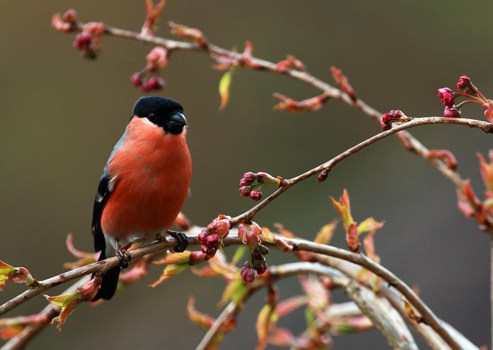 Bird, Feathers, Beak, Plumage, Colorful, Wildlife, Red