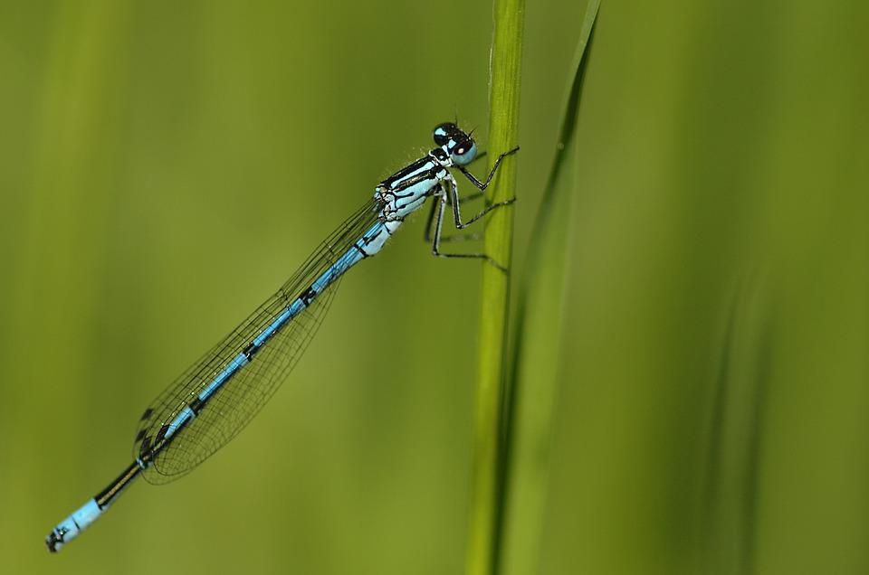 Green, Dragonfly, Insect, Wildlife, Outdoor, Resting