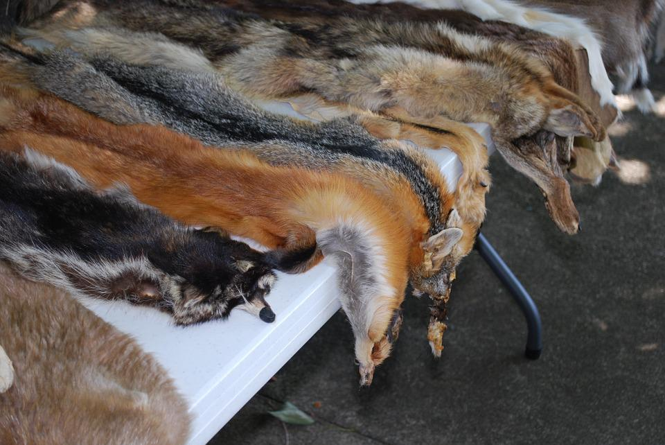 Animal Skins, Wildlife, Leather, Fur, Skin, Fox Skin
